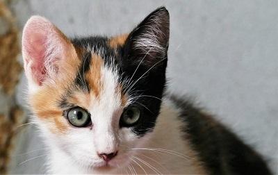 Devenir famille d'accueil chat et chaton