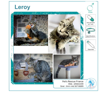 Leroy, chat à adopter en Creuse (23)