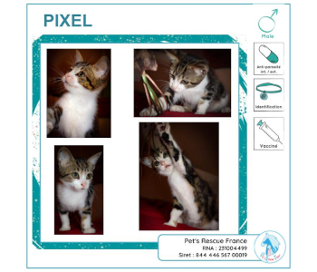 Pixel, chat à adopter en Creuse (23)