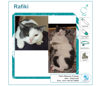 Rafiki, chat à adopter en Creuse (23)