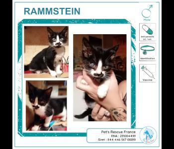 Rammstein, chat à adopter en Creuse (23)