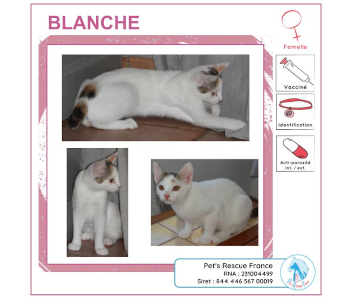 Blanche, chatte à adopter en Creuse (23)