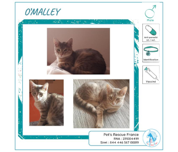 O'Malley, chat à adopter en Creuse (23)